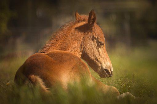 Horse, Foal, Pasture, Animal, Sweet, Cute, Grass