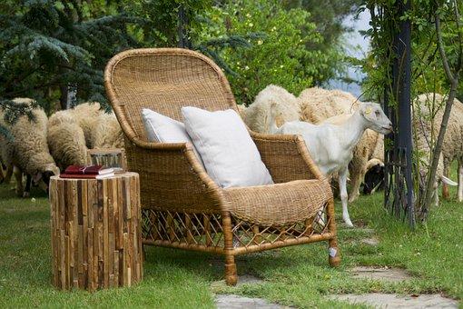 Sheep, Goat, Wool, Farm, Chair, Armchair, Furniture