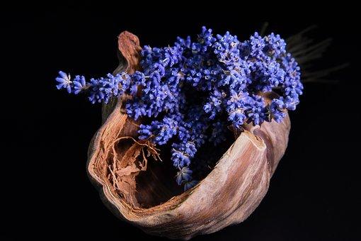 Lavender, Coconut, Black Background, Plant, Flowering