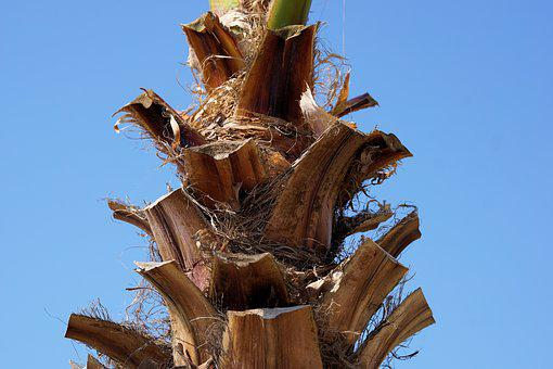 Palm, Tribe, Palm Tree Root, Plant, Structure, Log