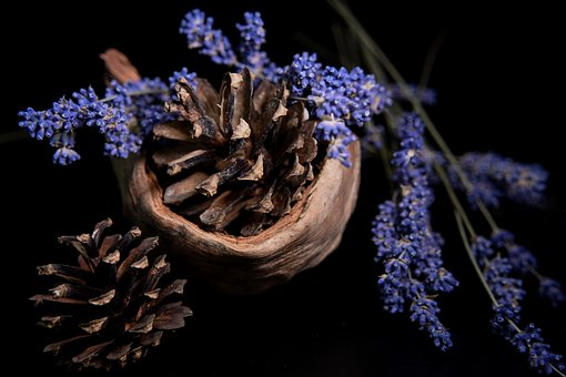 Lavender, Coconut, Cone, Black Background, Plant
