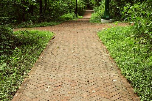 University, College, Campus, Path, Pathway, Walk, Route