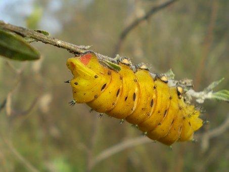Worm, Yellow, Climbing, Twig
