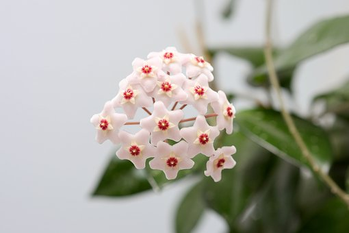 Blossom, Bloom, Flower, Houseplant, Close