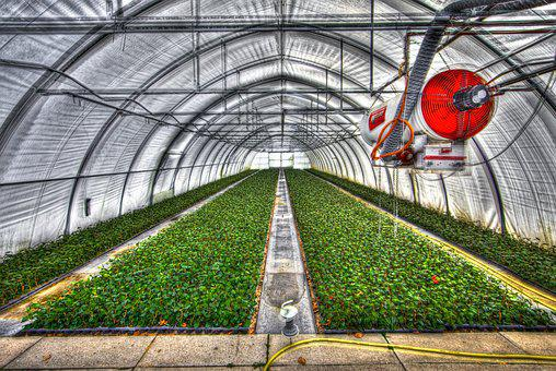 Greenhouse, Slide Tunnel, Crops, Vegetable Gardening