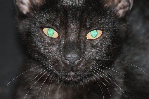 Cat, Black, Pet, Kitten, Tomcat, Black Cat, Eyes