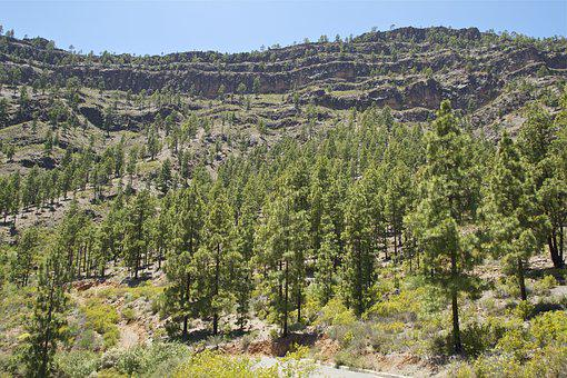 Gran Canaria, Mountain, Forest, Hiking, Spain, View