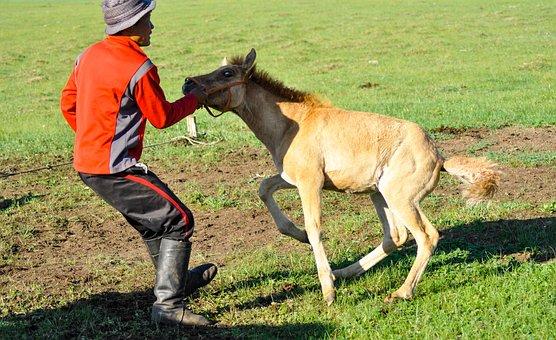 Foal, Tame, Struggle, Horse, Farm, Ranch, Livestock