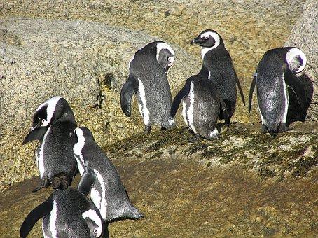 Boulders Bay, South Africa, Penguins, Africa, Bay