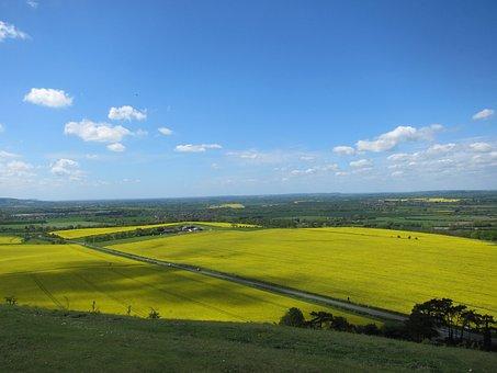 Landscape, Summer Landscape, Rapeseed, Countryside
