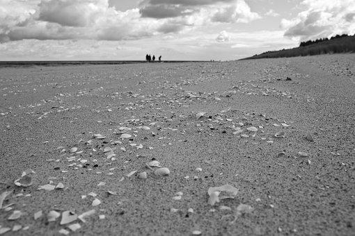 Darß, Baltic Sea, Island, Beach, Coast, Darss, Sea