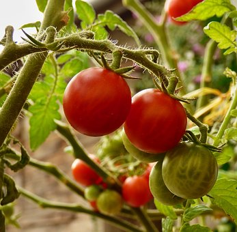 Tomato, Vegetables, Cultivation, Red, Bio, Tassels