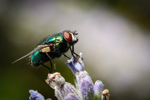 Insect, Fly, Bug, Nature, Pest, Wing, Wildlife, Macro
