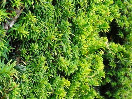 Hedge, Bush, Leaf, Leaves, Nature, Garden, Green