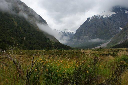 Mountains, Fog, Flowers, New Zealand
