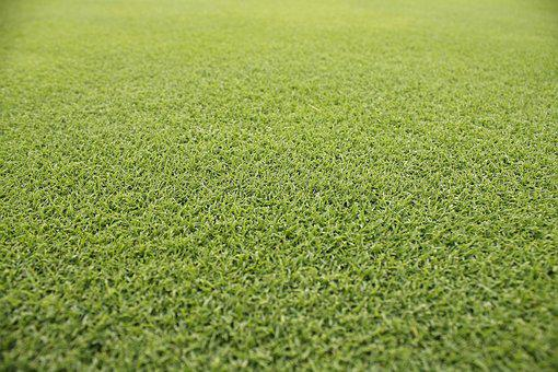 Grass, Pool, Summer, Golf Course Grass