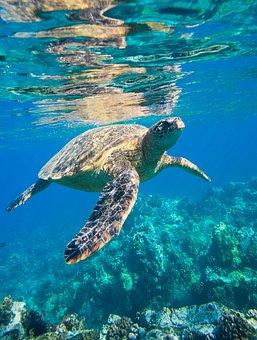 Sea Turtle, Is, Animals