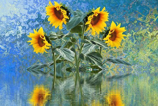 Sun Flower, Summer, Sun, Plant, Sunflower Bud