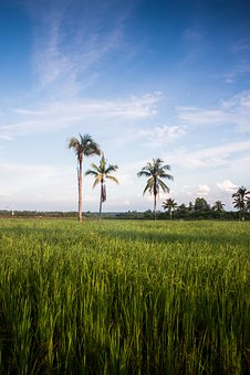 Landscape, Ternate, East Indonesia