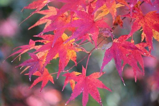Autumn, Fall, Nature, Autumnal, Foliage, Colorful