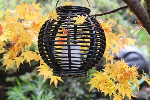 Autumn, Fall, Yellow, Season, Foliage, Color, Leaves