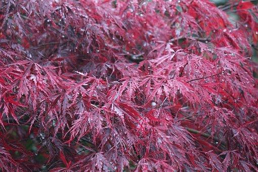 Autumn, Fall, Nature, Leaf, Foliage, Color, Leaves