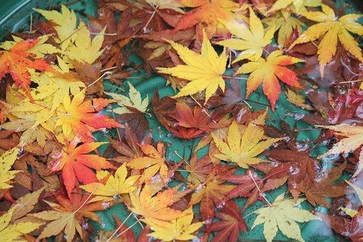 Autumn, Fall, Orange, Yellow, Nature, Season, Foliage