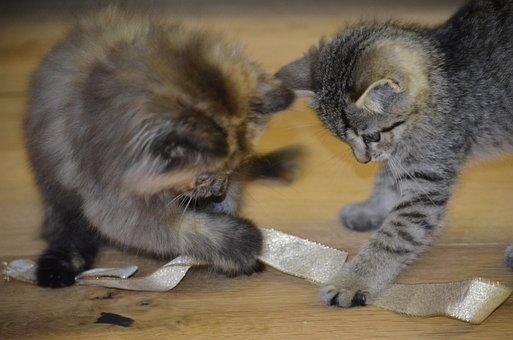 Play, Curiosity, Children, Animals, Pets, Cat