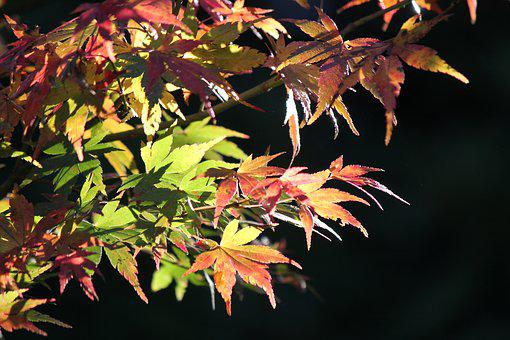 Autumn, Fall, Season, Leaf, Seasonal, Color, Leaves