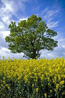 Tree, Field, Scotland, Nature, Landscape, Sky, Meadow