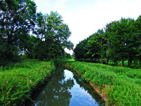Green, Park, Nature, Tree, Grass, Landscape, Brook