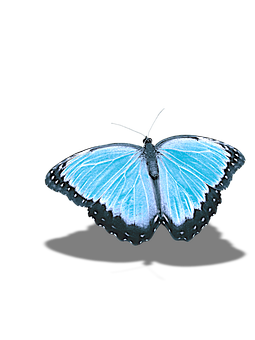 Butterfly, Png, Without Background, Shadow