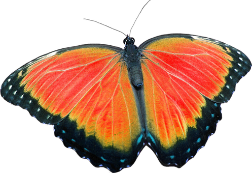 Butterfly, Png, Without Background, Craft Materials