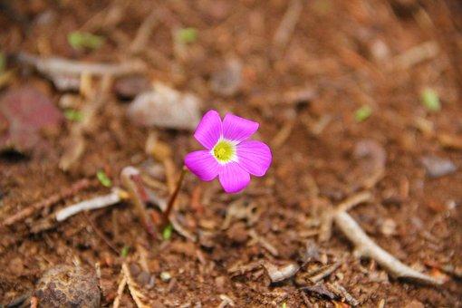 Purple Flower, Earth, Leaves, Flower, Plant, Purple