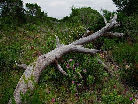 Flowers, Log, Nature, Tree, Plant, Landscape, Wood