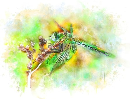 Dragonfly, Insect, Nature, Watercolor, Illustration