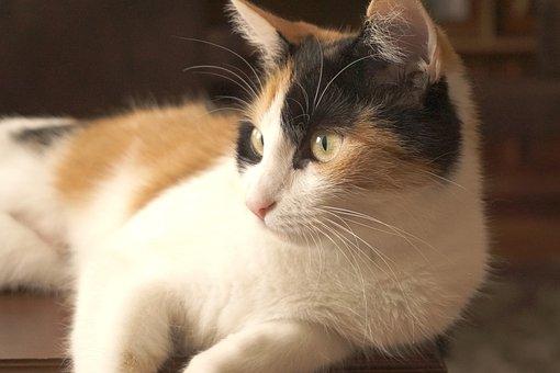 Cat, Pet, Young Cat, Animal, Cute, Kitten, Domestic Cat
