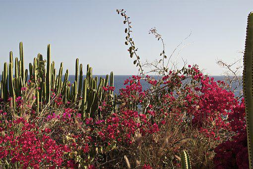 Gran Canaria, Spain, View, Canary Islands, Evening Sun