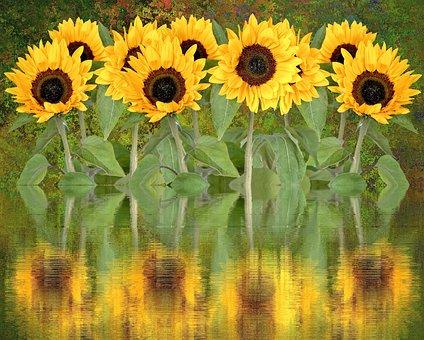 Sun Flower, Summer, Sun, Blossom, Bloom, Flower, Plant
