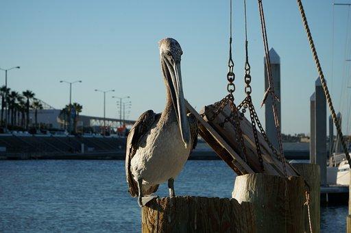 Pelican, Boat, Sea, Sky, Bird, Water, Travel, Ocean