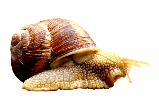 Snail, Animal, Home, Crawl, Shell, Cut Out, Exemption