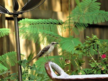 Bird, Song Bird, Natural, Garden