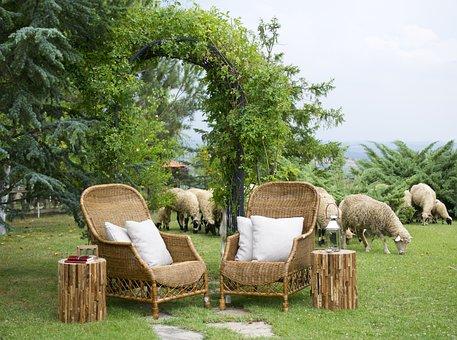 Chair, Sheep, Farm, Home, Grass, Green, Environmental