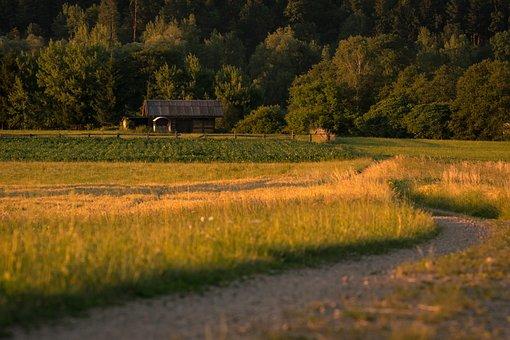 Landscape, Fields, Nature, Arable, Cereals, Agriculture