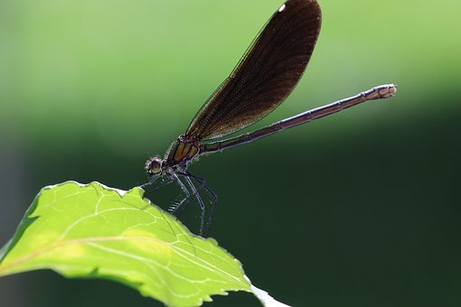 Dragonfly, Leaf, Insect, Close, Green, Wing, Macro