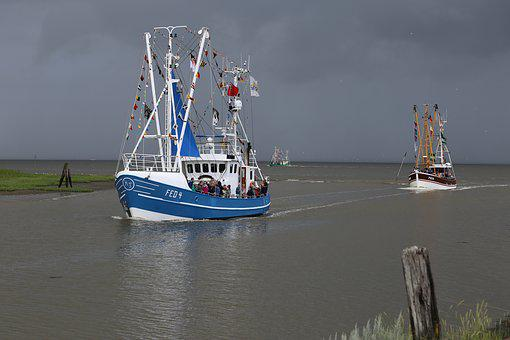 Shrimp, Port Fedderwardersiel, Boat Regatta