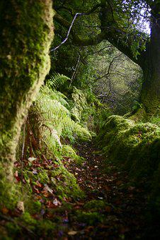 Scotland, Moss, Moody, Wild, Path