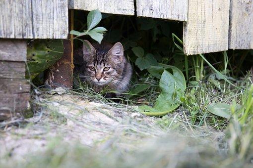 Cat, Fence, Summer, Pet, Village, Cat Person, Views