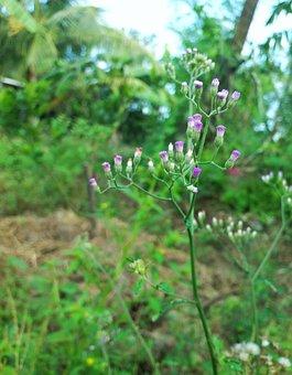 Flower, Flowers, United, Purple Flowers