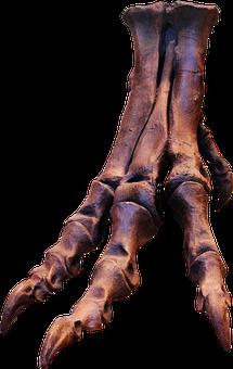 Trex, Skeleton, Bones, Foot, Ungal, Claws, Dinosaur